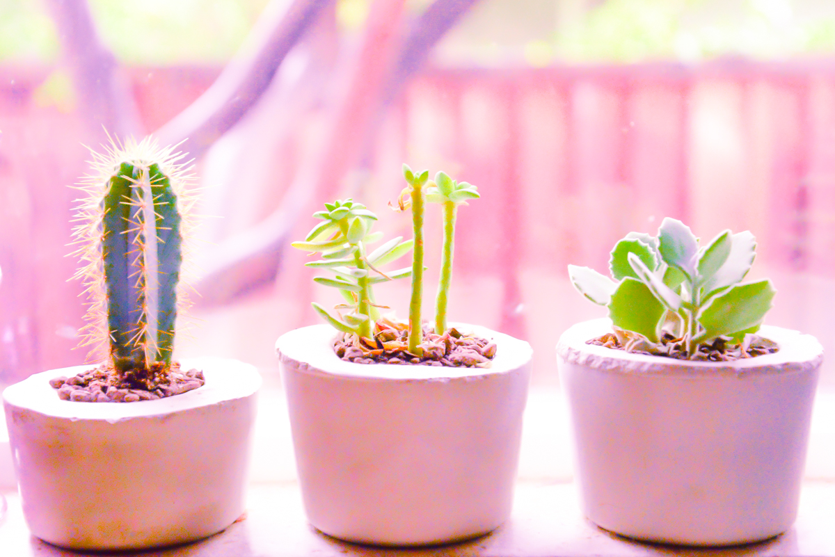 Succulentes001