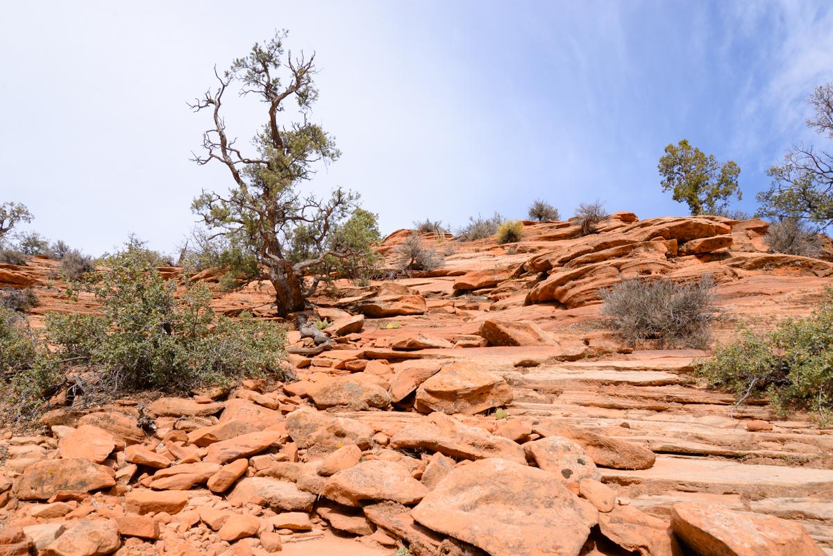 Zion-National-Park-pierre
