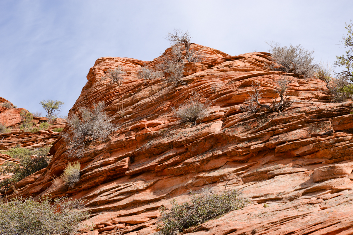 Zion-National-Park-roche-strates