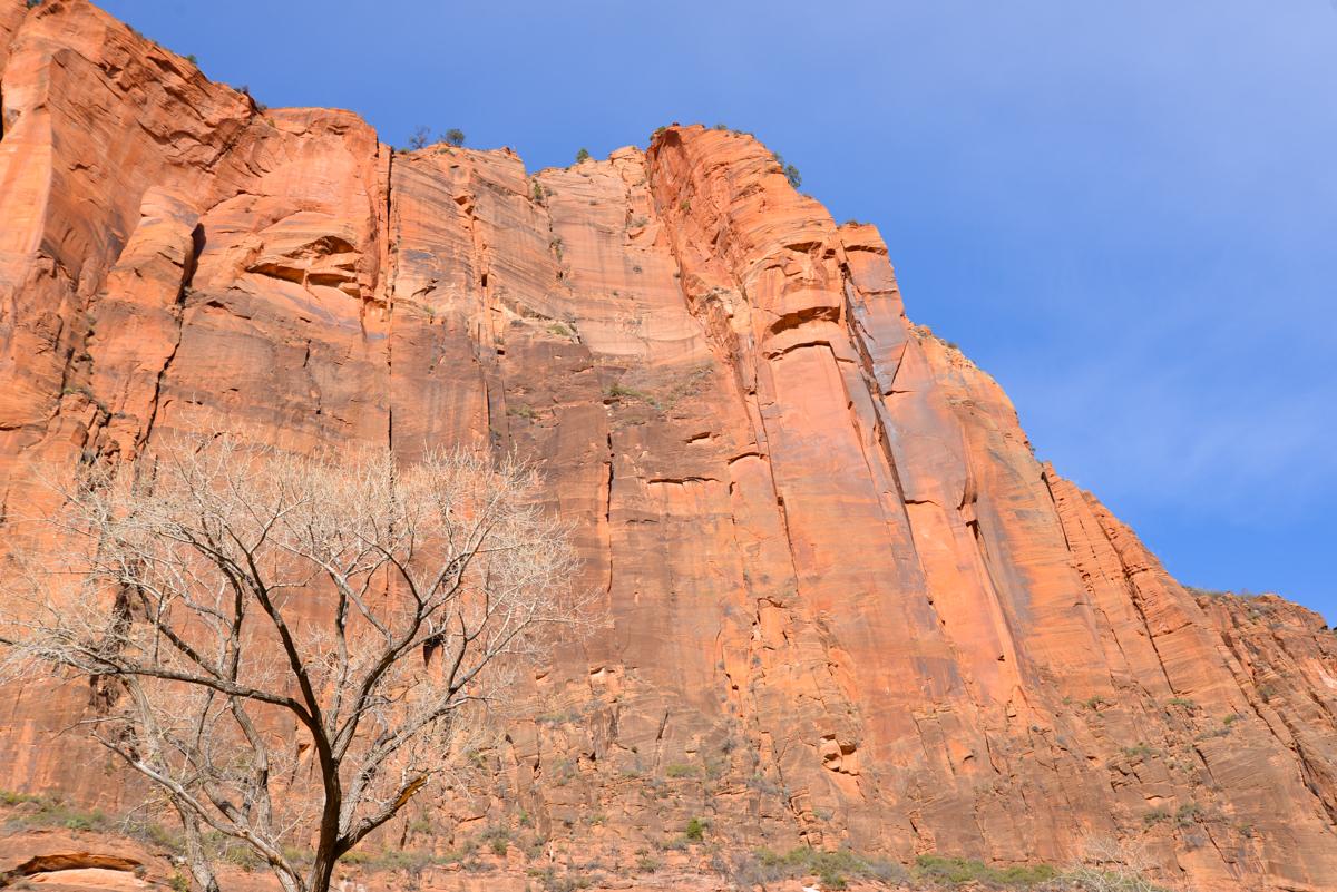 Zion-National-Park-rouge