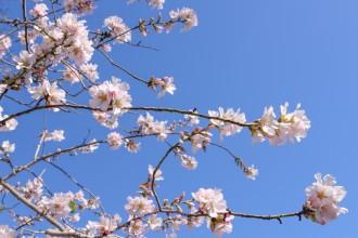 arbre-en-fleur001