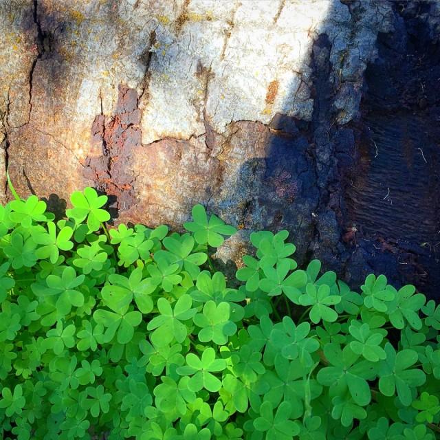 Flow-29-joursbelle-plante