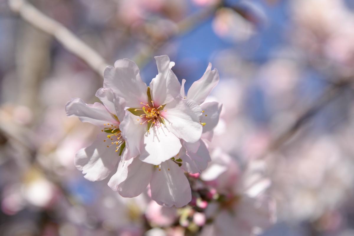 Jolis-bonheurs-fevrier-arbre-fleuri