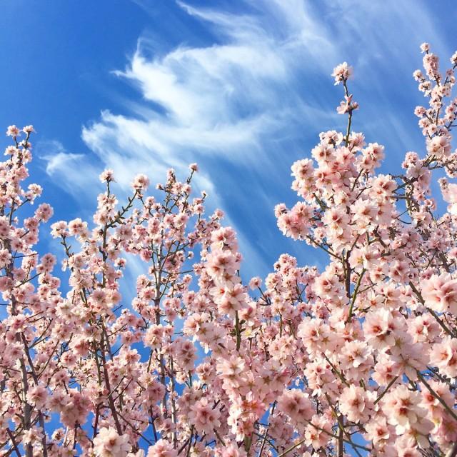 Jolis-bonheurs-fevrier-fleurs-ciel