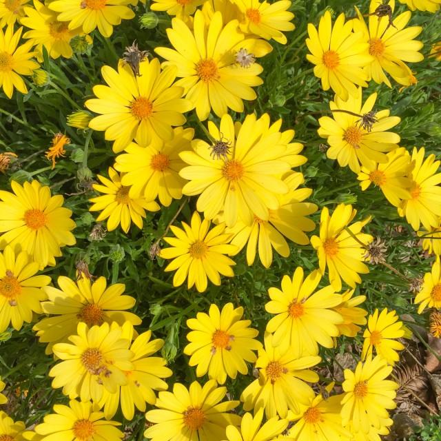 Jolis-bonheurs-fevrier-fleurs-jaunes