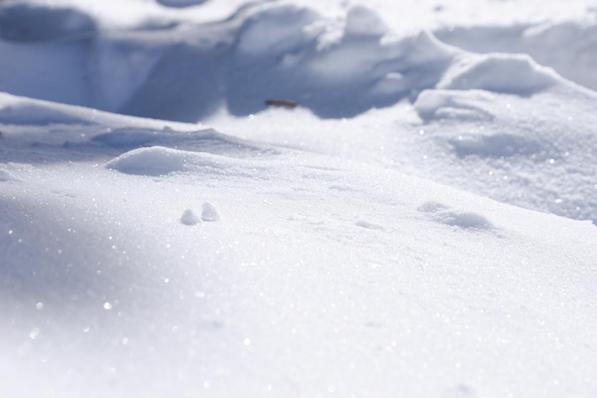 Tahoe-Donner-neige-blanche