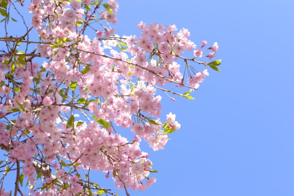 Filoli-garden-fleurs-arbres