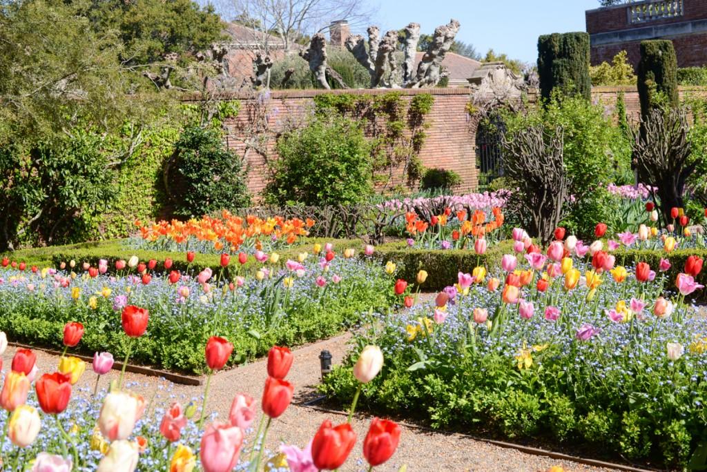 Filoli-garden-printemps-tulipes
