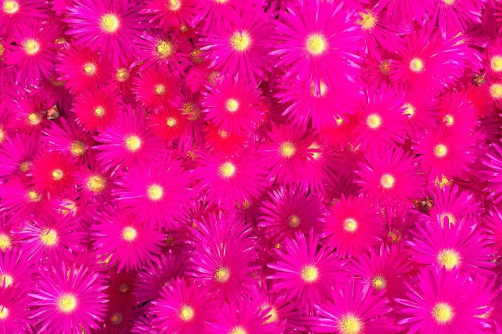 Happy-vendredi-fleur001