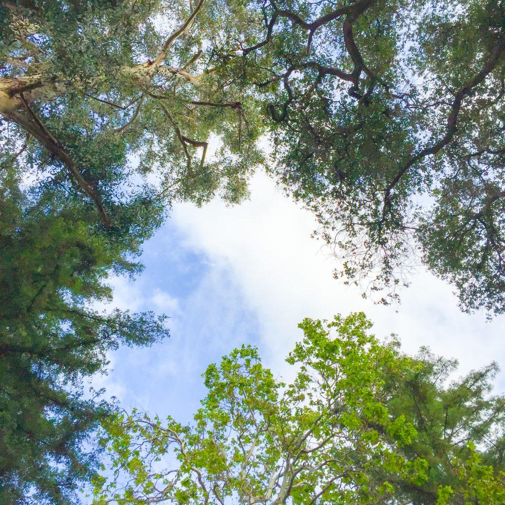 Jolis-bonheurs-arbres