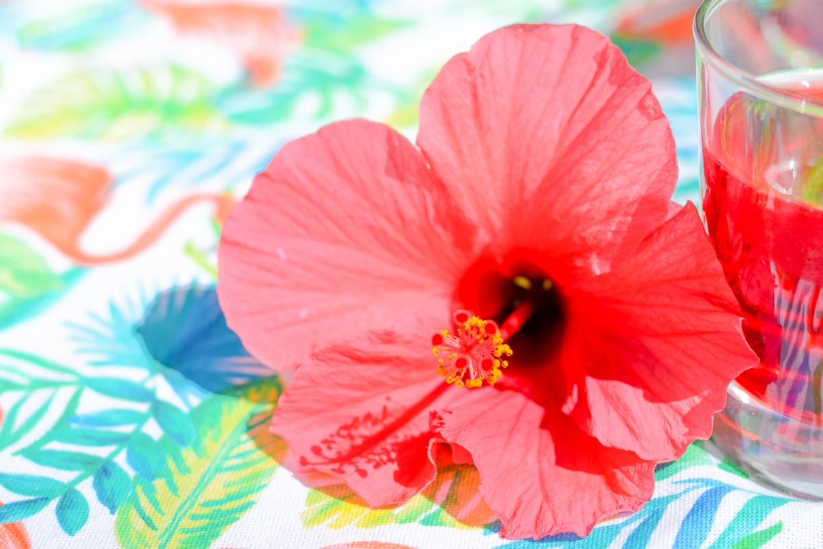 Sirop a la fleur d'hibiscus