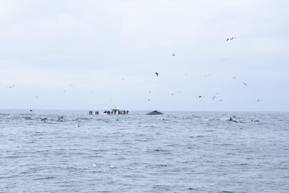 Sortie aux baleines