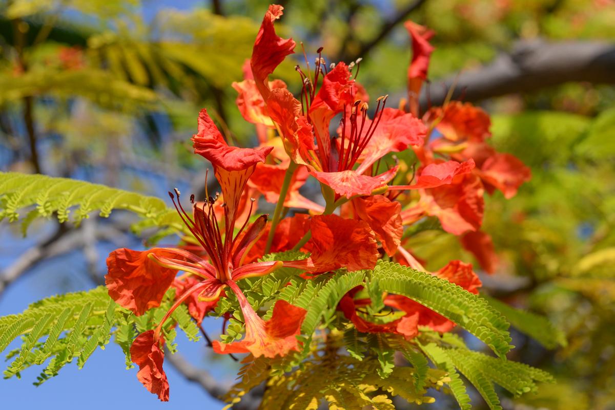 Jardin-botanique-Big-Island-Hawaii
