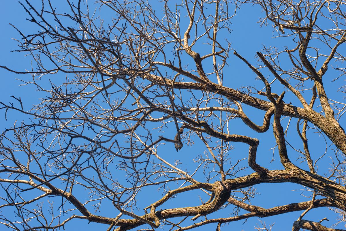 detail arbre