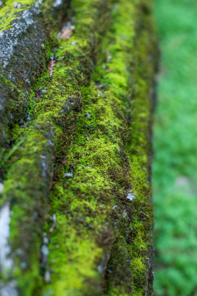 mousse arbre