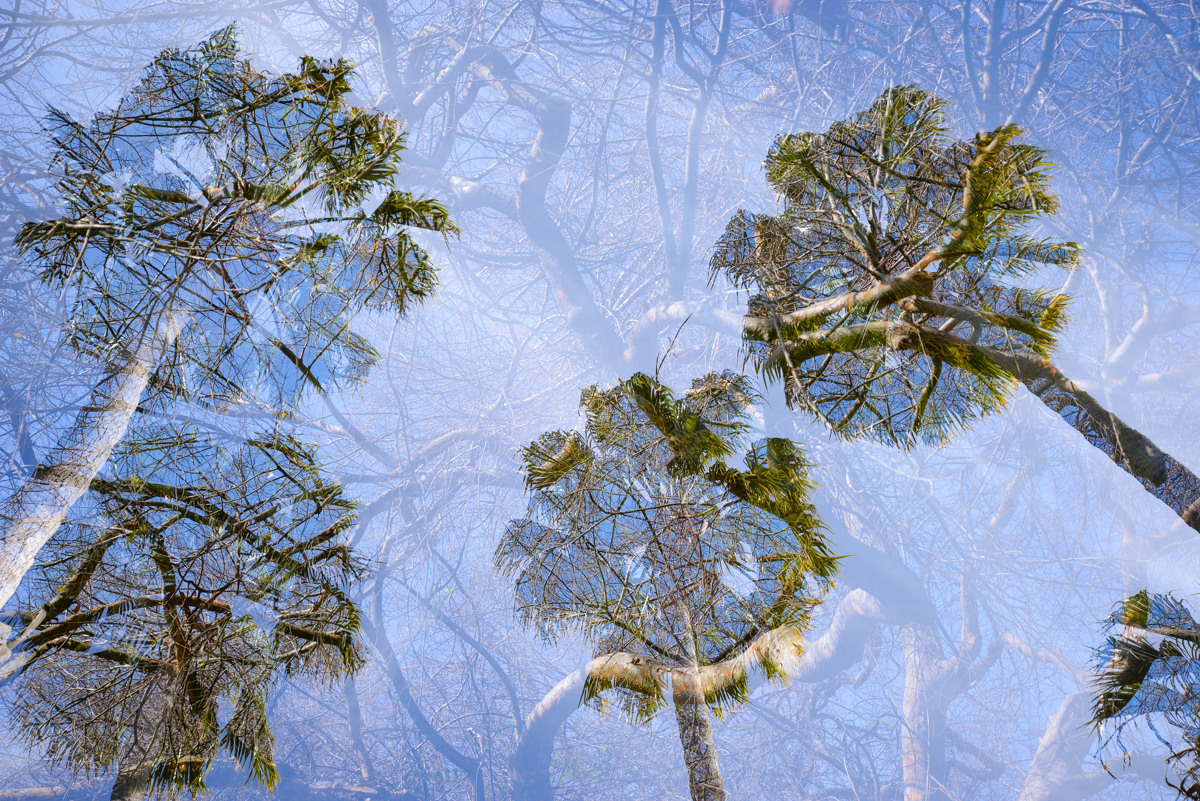 double-exposition-palmier