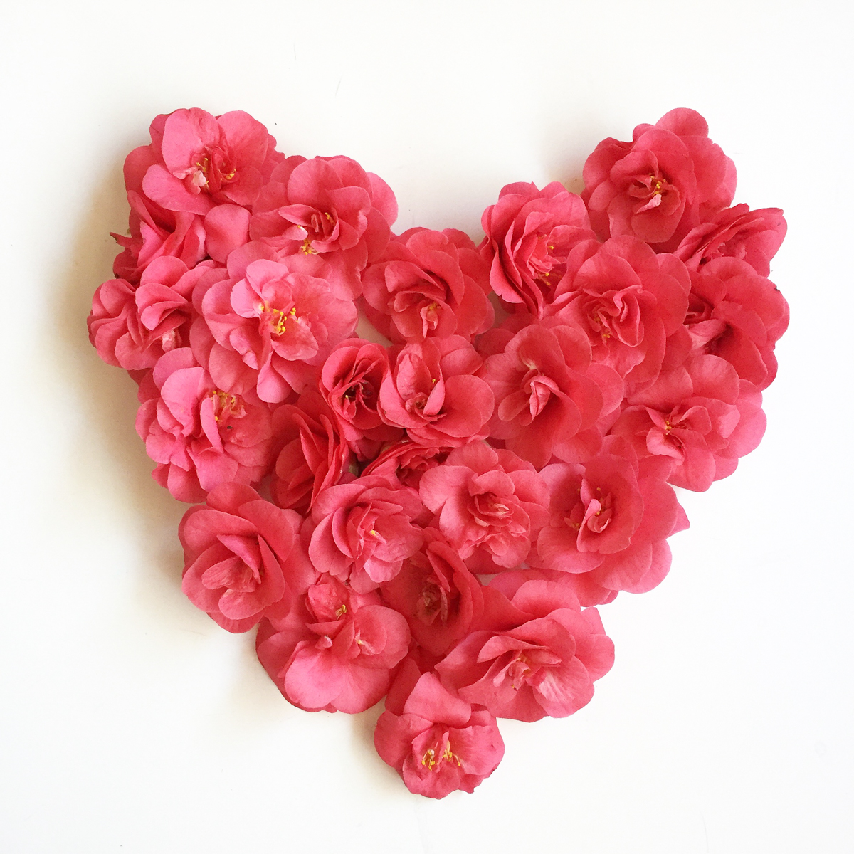 Saint-Valentin-petales