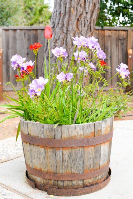 fleurs-tonneau
