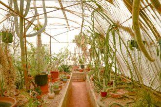 serre-cactus