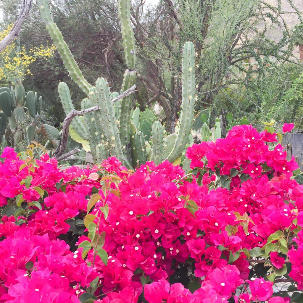 Palm-springs-californie