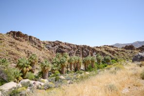 indian-canyons-californie