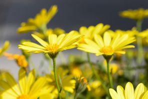 le-printemps-dans-mon-jardin