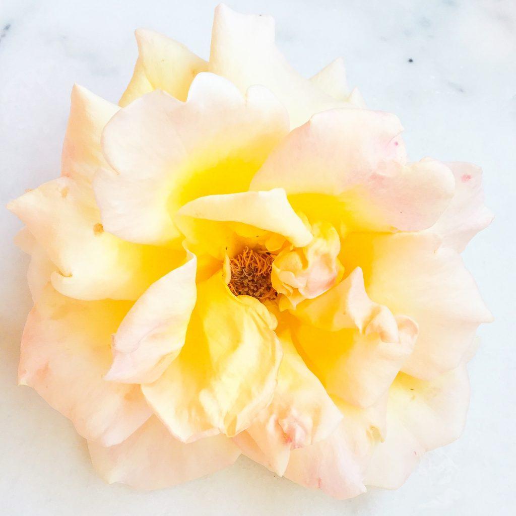 rose-jaune