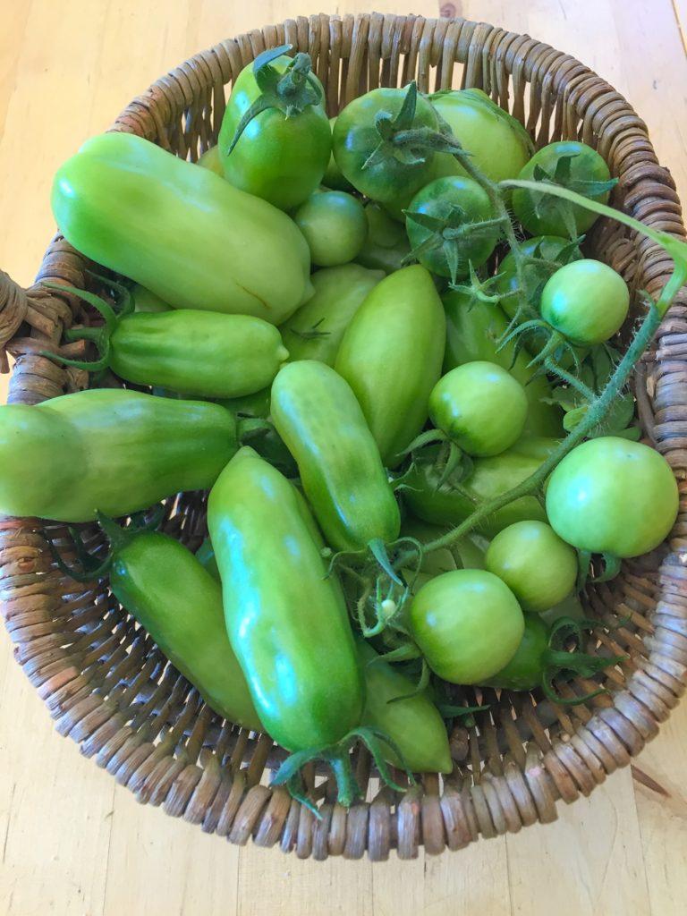 tomates-vertes