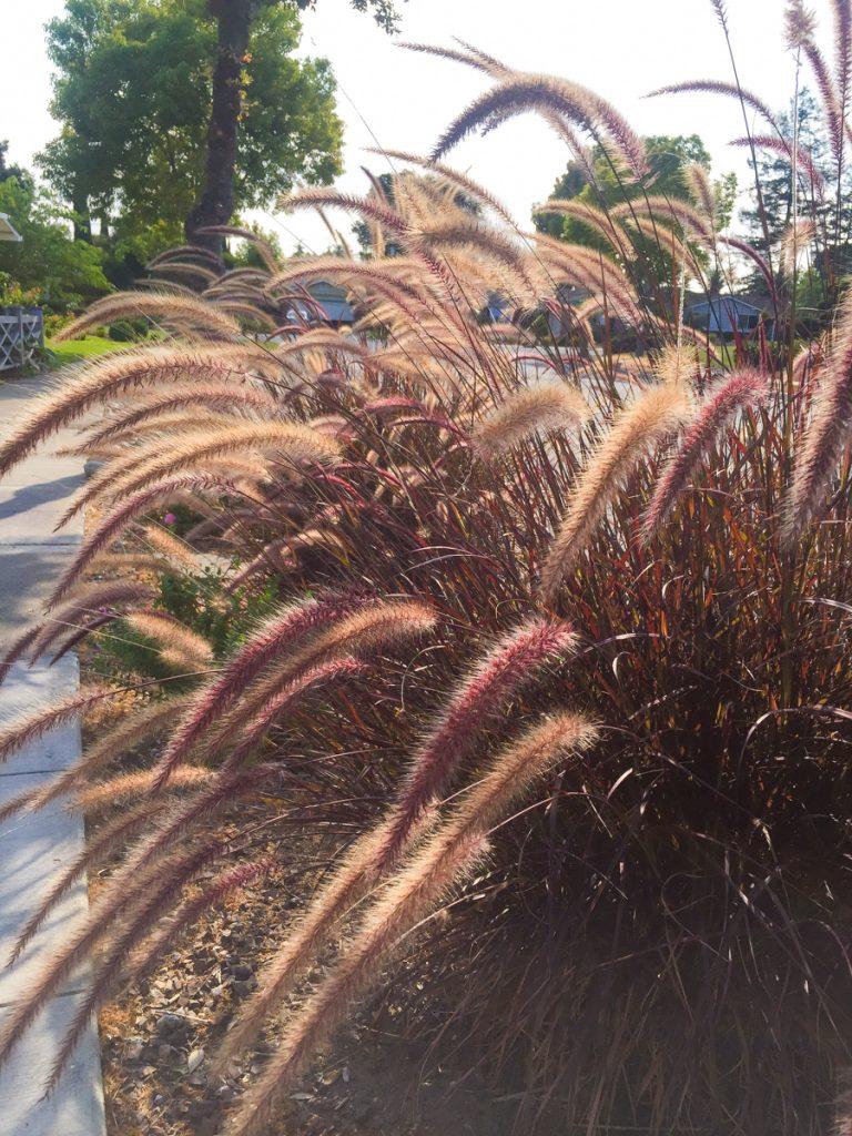 plantes-voisinage