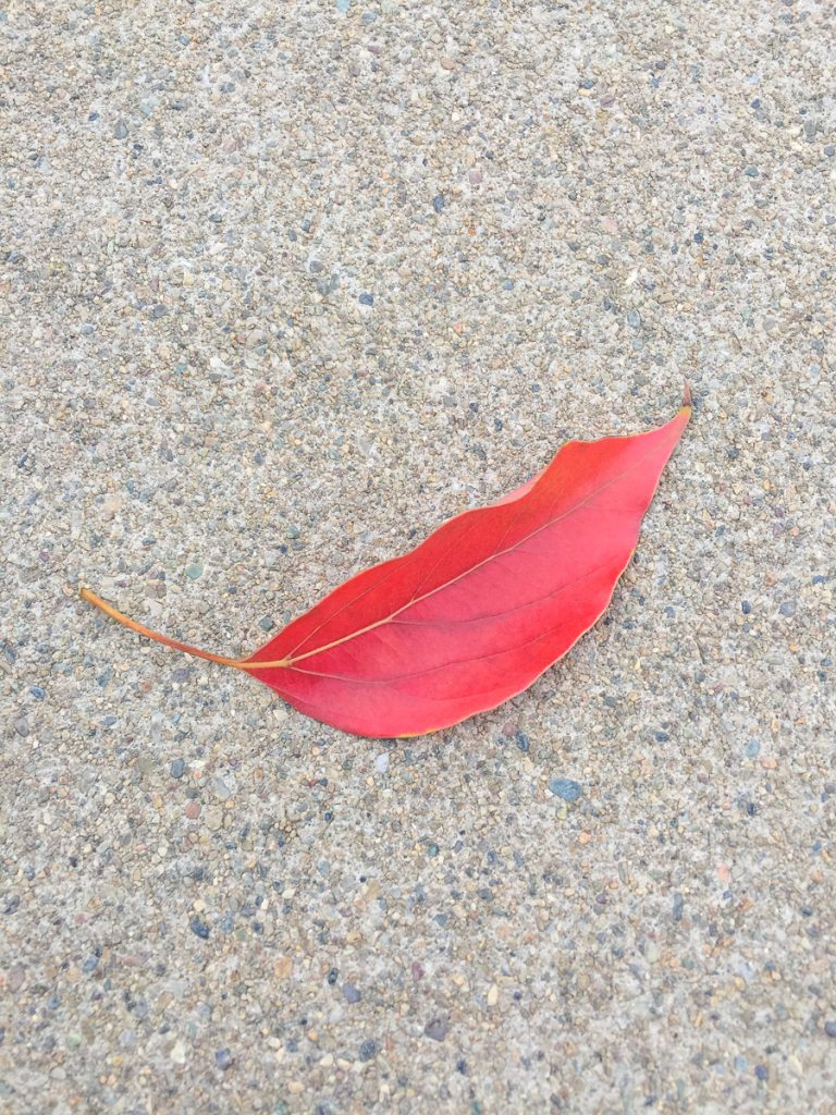 signe-automne-feuille