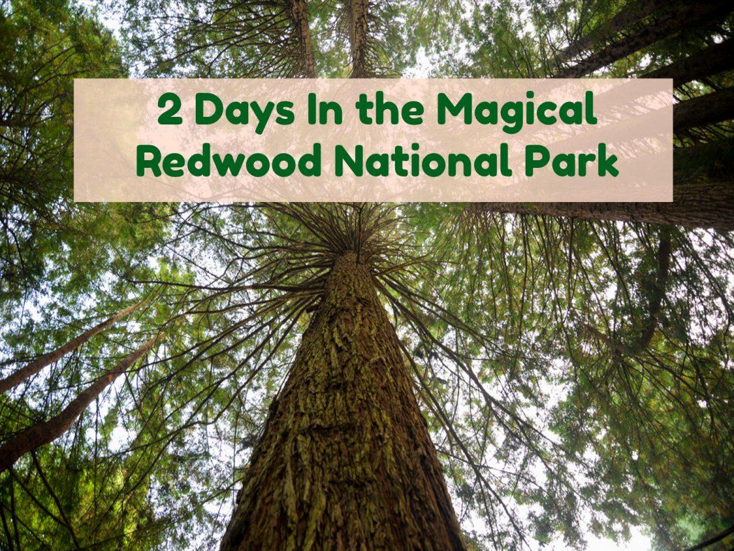 video-redwood-national-park