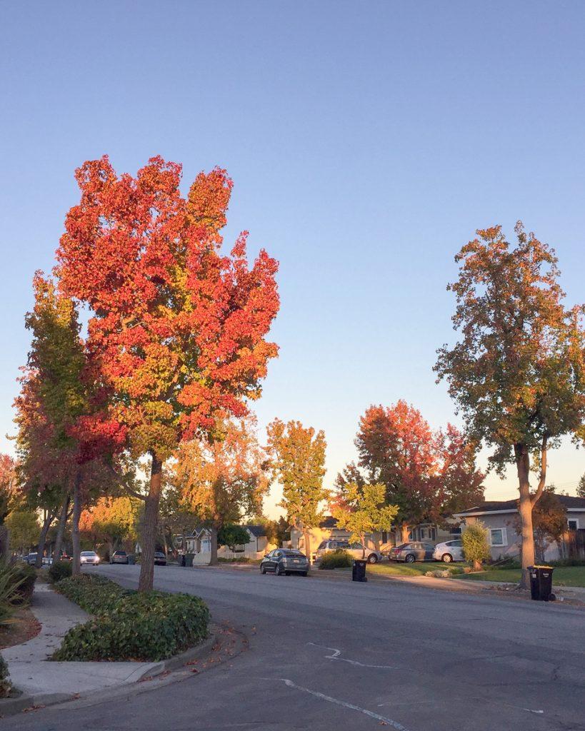 automne-quartier