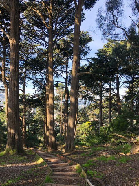 Buena-vista-park