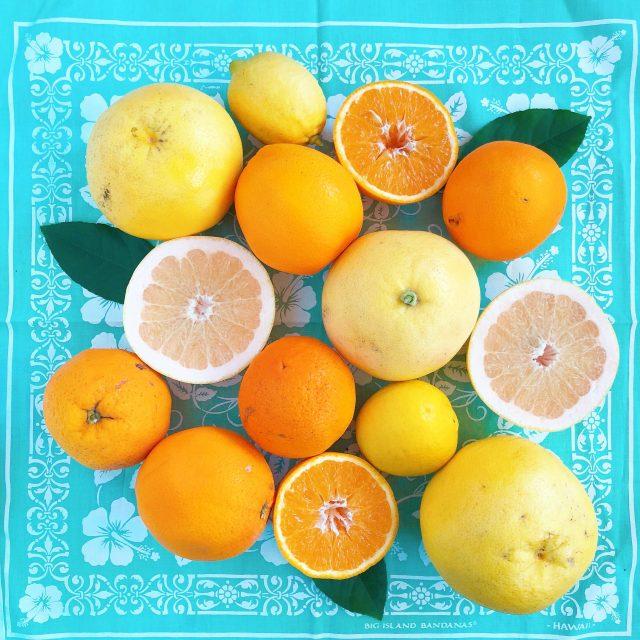 oranges-pamplemousses