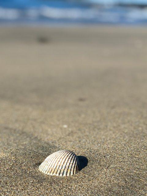 coquillage-californie