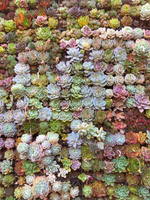 Flora-grubb-gardens