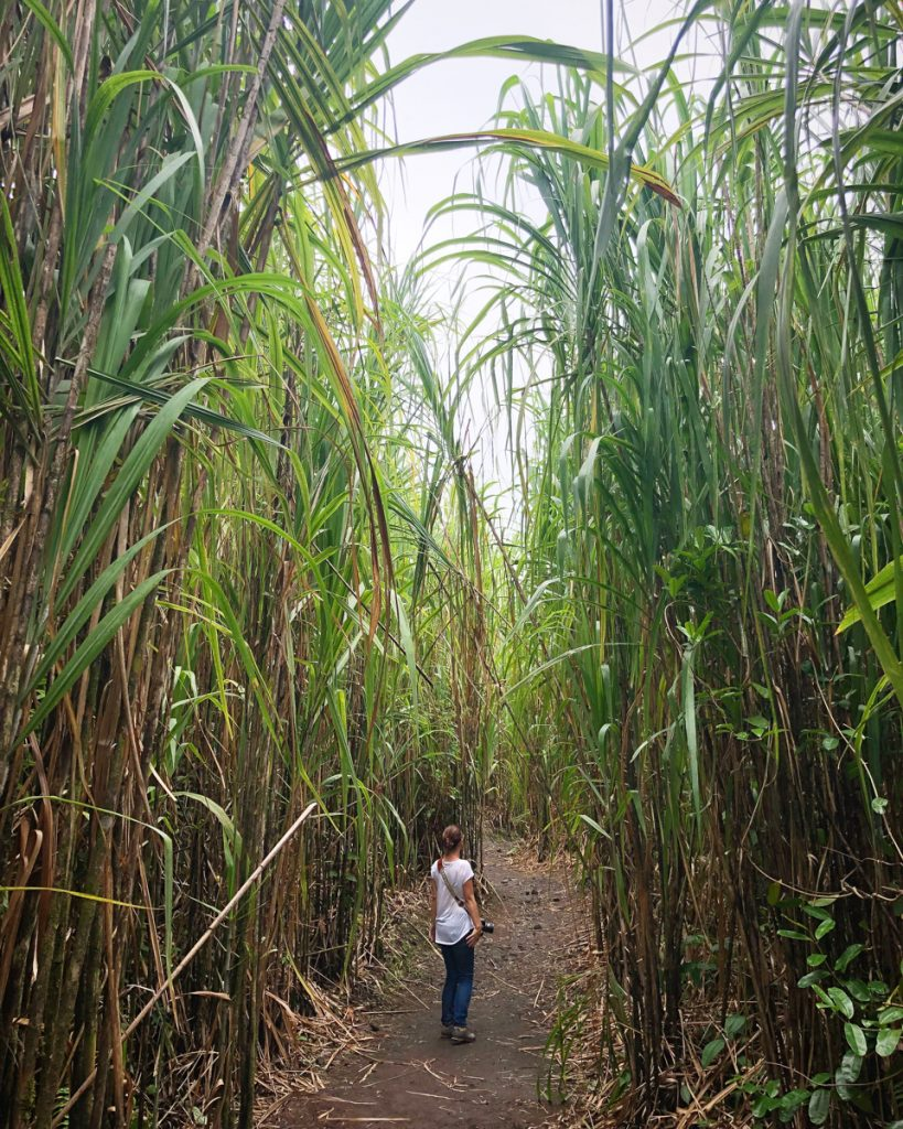 costa-rica-plantation