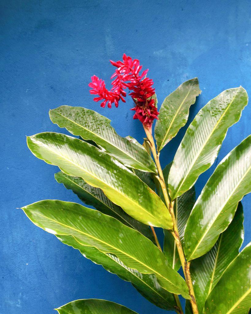 fleur-costa-rica