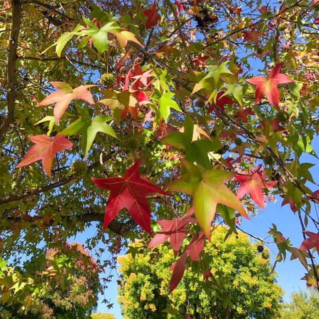 feuilles-automne-californie