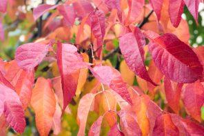 automne-feuilles