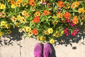 joli-bonheur-fleur