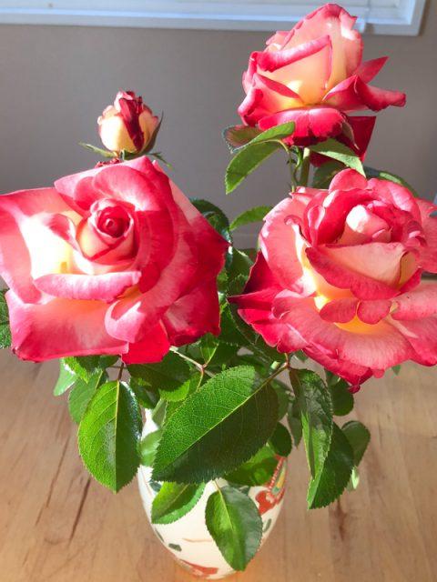 roses-jardin-californie