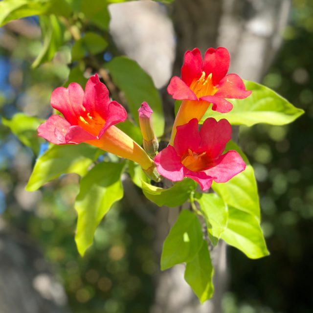fleurs-jolis-bonheurs