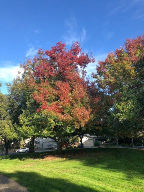 couleur-automne