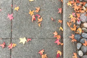 marche-automne-californie