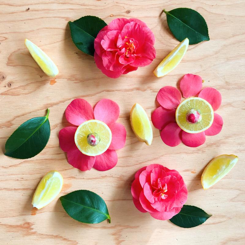 cueillette-jardin-fleur