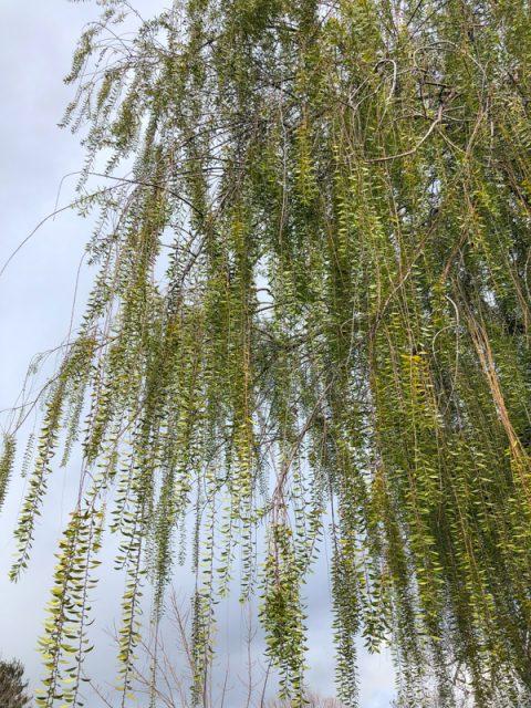 arbre-feuille