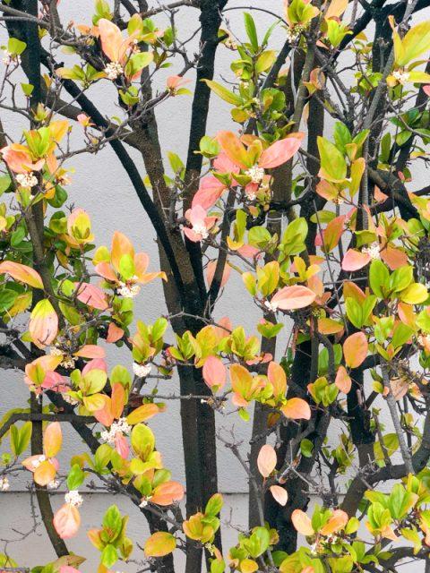 jolies-feuilles