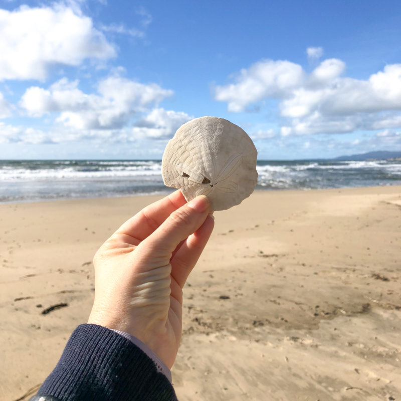 sand-dollar-plage