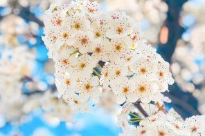 printemps-californie